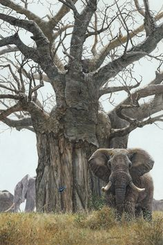 Elephants & a Baobab tree. - Jan Martin McGuire, Behemoths, acrylic, 36 x Beautiful Creatures, Animals Beautiful, Weird Trees, Baobab Tree, Wild Elephant, Unique Trees, Old Trees, Southwest Art, All Nature