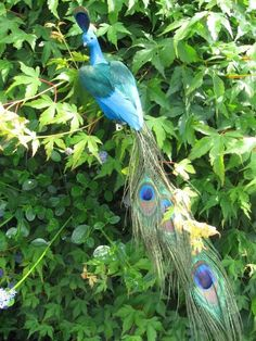 Artificial Feather Peacock with Peacock Eyes Tail - 40cm Length