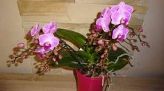 Indoor Plants, House Plants, Flora, Home And Garden, Gardening, Orchids, Lawn And Garden, Inside Plants, Indoor House Plants