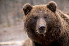 Gawęda z Niedźwiedziego Grodu