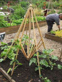 Gardening season is coming soon! Repurpose a patio umbrella frame that has lost its canopy as a trellis in your garden!