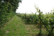 Domein De Vier Ambachten is tijdens de Open Dagen Nederlandse wijngaarden 2014 te bezoeken op zowel zaterdag 20 september als zondag 21 september. De wijngaard is op beide dagen geopend van 11.00 tot 17.00 uur.  Adres: Biertsedijk 8, 3212LB Simonshaven  (Zuid-Holland)