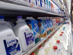 5 Ridiculous Myths About Cows Milk/ Cow's milk DOES NOT build strong bones!  (except in calves).