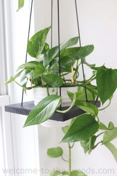 Diy Hanging Planter, Wood Planter Box, Wood Planters, Hanging Basket, Wall Plant Hanger, Plant Wall, Macrame Plant Holder, Plant Holders, Garden Bed Layout