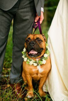 Pup lookin' wedding day pretty  Photography By / lindsaymaddenphotography.com, Floral Design By / RosePetalsandLace.com