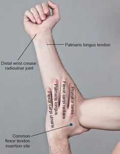 Pin by Nancy Bates on Anatomy and Physiology Physical Therapy Student, Occupational Therapy, Physical Therapist, Medicine Notes, Sports Medicine, Gross Anatomy, Human Anatomy And Physiology, Medical Anatomy, Muscle Anatomy