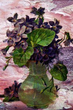 Violets were always on Lizzie's kitchen window sills.