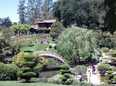 California Poppies: The Huntington Library, Art Collections, And Botanical Gardens