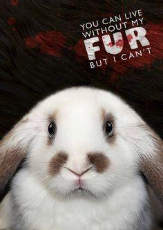 Live cruelty free.