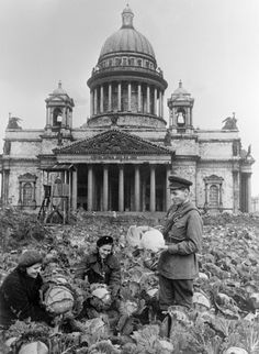 Two Soviet soldiers and a woman collect cabbages near the St. Isaacs Cathedral, during the siege of Leningrad