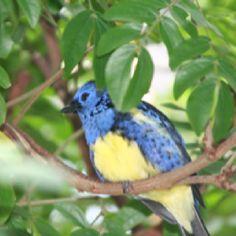Bird in a bush...