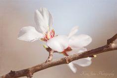 ...almond trees