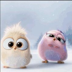 Cute Animated Angry Birds