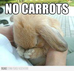 No carrots...