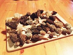Virginia & Tennessee Spring 2014 Mountain morel harvest  - How many varieties can you identify? Whites, yellows, greys, blacks, half frees??