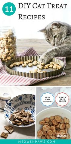 Your cat will love these simple DIY cat treats! Homemade cat treat recipes, from… Your cat will love these simple DIY cat treats! Homemade cat treat recipes, from basic ones, to more complicated ones. But all of them will probably be kitty-approved. Kitten Treats, Pet Treats, Healthy Cat Treats, Kitten Food, Healthy Pets, Diy Cat Toys, Cats Diy, Diys For Cats, Cat Recipes
