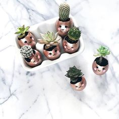 TGIF! via @luxeandthelady Follow us @succulentcity & tag your succulent collection #succulentcity to be featured!! #succulents #succulent #succulove #succulentgarden #succulentaddict #succulentsofinstagram