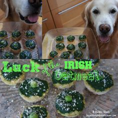 Today we are featuring a recipe from the March edition of EveryDay with Rachael Ray magazine. Are you celebrating St Patrick's Day with your dog? How about making your dog a DELISH Irish Oatmeal breakfast. Luck Of The Irish Oatmeal (from page 118, EveryDay with Rachel Ray) Makes: 4 cups Prep: 5 min cook: 25 …