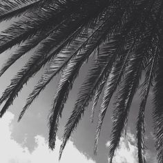 @kamplainnn ❃ black and white photography palm trees