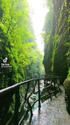 Beautiful Places, Most Beautiful, Nature Gif, Nature Videos, Cute Baby Cats, Nature Adventure, Travel Videos, Video Photography, Amazing Nature