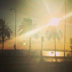 Palma en noviembre