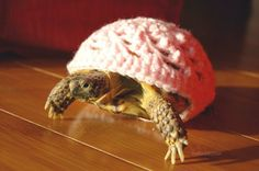 Crocheted turtle cozies. Seriously, CROCHETED TURTLE COZIES. Look, there's a turtle wearing a cozy. OMG via Make