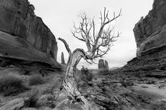 Grizzled old Tree in Arches National Park.  Captured with the #Sony #a6300 and 10-18mm lens  And this is my LAST image for the  7 days of the #naturephotography challenge Want to join me in the 7 days of nature photography challenge?  BIG Thanks to those that played along and  Uploaded #PRTVwildchallenge  See YOUR uploads that made my picks from yesterday at http://ift.tt/2kEWnOO  and check back tomorrow for my favorites from Day 7.