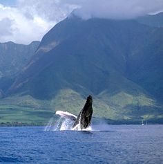 North America's Best Whale-Watching Spots- Follow Ishmael's footsteps: go whale watching, from the banks of Cape Cod to the tropical shores of Hawaii. From July 2012 By Sarah Rose