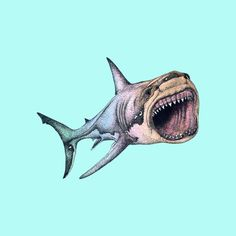 Shark Tattoos, Foot Tattoos, Great White Shark Drawing, Shark Images, Shark Logo, Knee Tattoo, Shark Art, Arm Sleeve Tattoos, Angler Fish