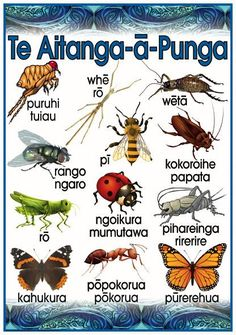 Te Aitanga-ä-Punga Promote and encourage Te Reo Maori in your class environment or learning centre with this fabulous vocabulary poster. Filipino Tribal Tattoos, Hawaiian Tribal Tattoos, Art Maori, Ant Crafts, Maori Words, Maori Symbols, Polynesian Art, Cross Tattoo For Men, Maori Designs