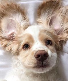 Animals And Pets Dogs Kitty Cute Funny Animals, Cute Baby Animals, Animals And Pets, Cute Dogs And Puppies, I Love Dogs, Doggies, Cockerspaniel, Cute Creatures, Dog Grooming