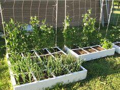 square foot gardening...pretty neat....I still like my 18 by 30 foot plot