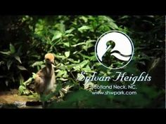 Sylvan Heights Bird Park designed to give visitors an unforgettable up-close experience with over 2,000 ducks, geese, swans, and other exotic birds from around the world.(252) 826-3186 (just under 2 hrs drive from durham) 500 Sylvan Heights Park Way PO Drawer 368 Scotland Neck, NC 27874