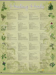 17 Best Images About HERBS, HERBS, HERBS On Pinterest Depression - 772x1030 - jpeg