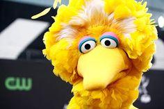 love you big bird