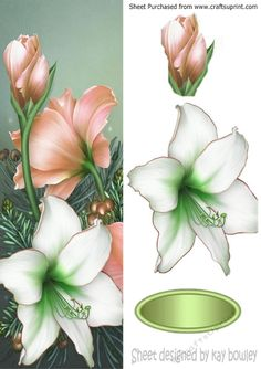 Pretty peach and white poinsettias tall DL, Makes a pretty christmas card, can be seen in other colours