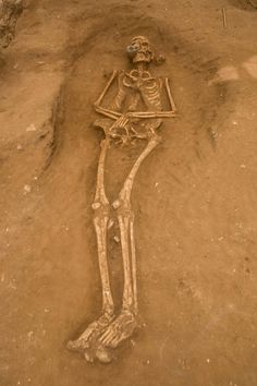 Archaeological Discovery of Philistine Cemetery in Ashkelon, Israel May Solve Biblical Mystery Ancient Aliens, Ancient History, Ufo, Giants In The Bible, Nephilim Giants, Nephilim Bones, Giant People, Tall People, Sea Peoples