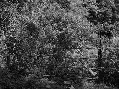 A gate on Hill road Wouldham in Kent