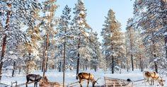 20 fotos que demuestran que Finlandia es un destino de ENSUEÑO!
