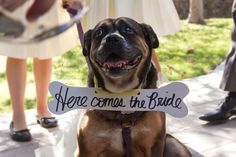 Tasha, who also served as a lovely flower girl | Photography by Kimberly Rae #wedding #pets