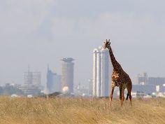 A voyage to Kenya, Africa - Nairobi, Mombasa, Nakuru, Kisumu, Eldoret, Nyeri, Machakos, Meru...