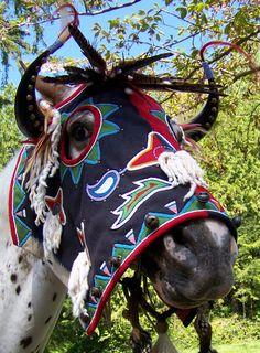 Angela Swedberg: Horse Gear