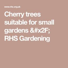 Cherry trees suitable for small gardens / RHS Gardening