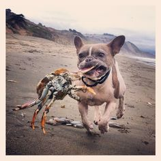 Found a couple sticks attached to this guy. Mia - Fort Funston, San Francisco, CA by Kristen