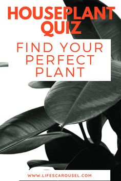 Not sure which type of houseplant to get? Take this houseplant quiz to find your PERFECT match! Answer these easy questions to find the right plant for you! Growing Vegetables Indoors, Types Of Houseplants, Modern Hipster, Easy Plants To Grow, Hipster Room Decor, Low Light Plants, Mosquito Repelling Plants, Perfect Plants, Colorful Plants