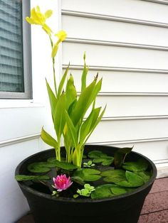 Source List  Container – $20 – Big Lots  Water Lillies – $3.98 – Lowe's ($1.99 each on clearence)  Water Lettuce - $1.98 – Lowe's ($0.99 each on clearence)  Canna Lilly – $2.00 – Home Depot ( bought a 5 bulb pack for $5.   Potting Soil –   Fish – $0.75 – Walmart  Fish Food – $2.00  Fish Net ( helps when changing the water) –   Mosquito Dunks -$5.99  Total - $36.70