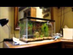 how to setup an aquatic turtle tank