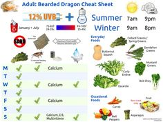Bearded Dragon Cheat Sheet