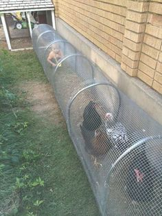 Raising chickens in your backyard or garden is great idea to get the freshest eggs and healthy meat. It seems to be a good idea to allow chickens to free range, but problems can arise, chickens may destroy the flower beds and vegetable patches in your backyard. Putting the birds in the cage is not [...] #raisedgardenbeds #raisedvegetablegardeningideas #raisingchickens
