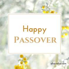 Happy Blessed Passover multicolored greeting cards square image 3 http://ahavaha.com/blog-ahavaha/ #Jesus, #Passover #Pesach #Exodus #HappyPassover #BlessedPassover #Faith, #Hope, #Love, #Bible, #HolySpirit, #Christianity, #Scripture, #Prayer #Card #Beautiful